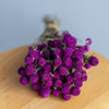 Dried Globe Amaranth - Dark Purple