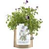 Kid's Gardening Gift - Garden-in-a-Bag - Viola