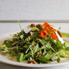 Organic Seed Sampler Pack - Microgreens