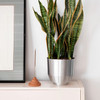 Yield Incense Eco-Friendly - Eucalyptus & Rosemary