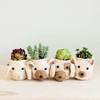 Mini Bear Planter