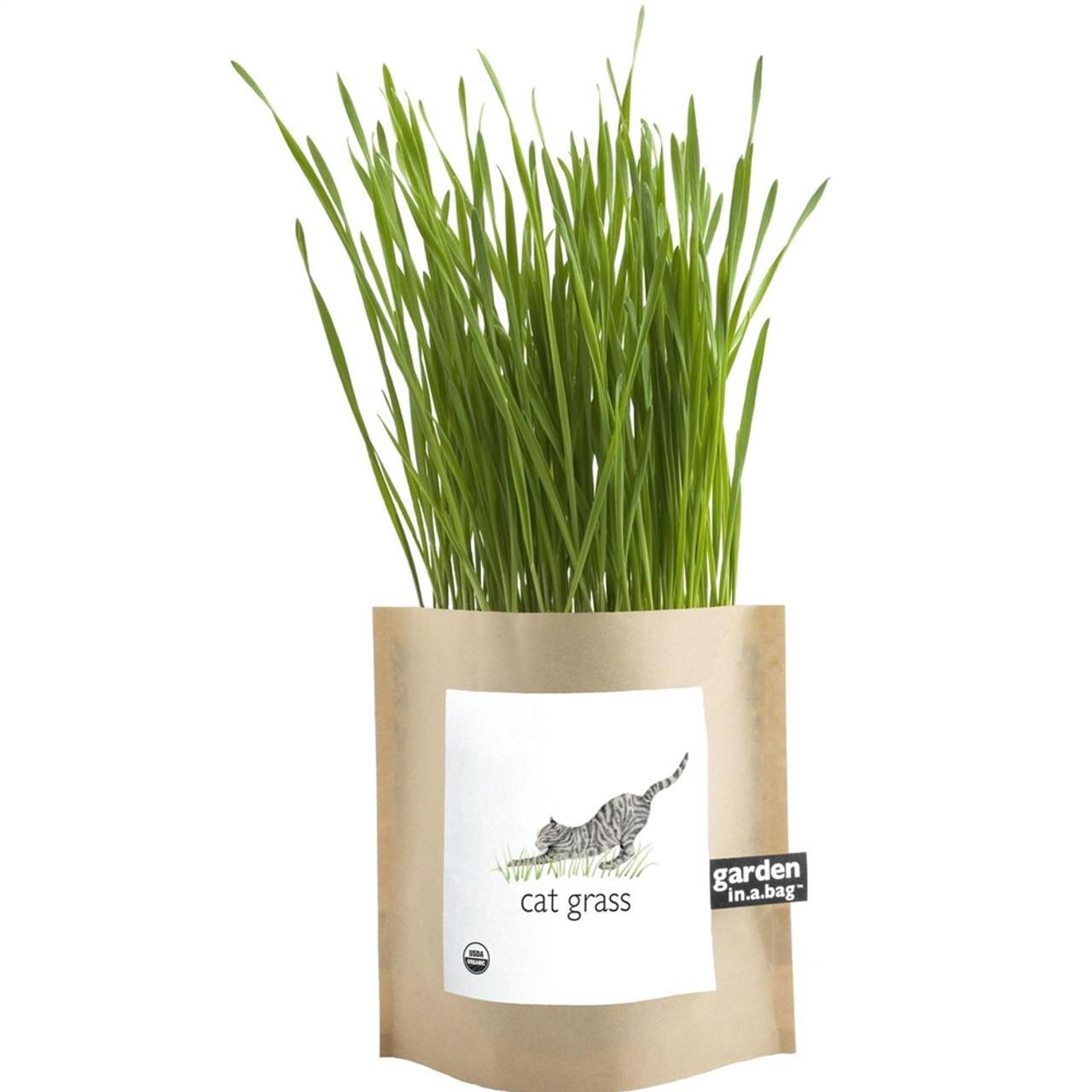 Cat Grass Garden in a Bag