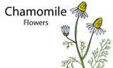 Herbal Benefits of Chamomile Tea And How To Brew?