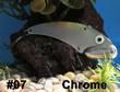 Wolf's Big Dude Blade Baits in Chrome - #07