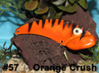 Orange Crush - #57