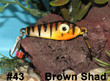 Brown Shad