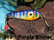 Purple Shiner