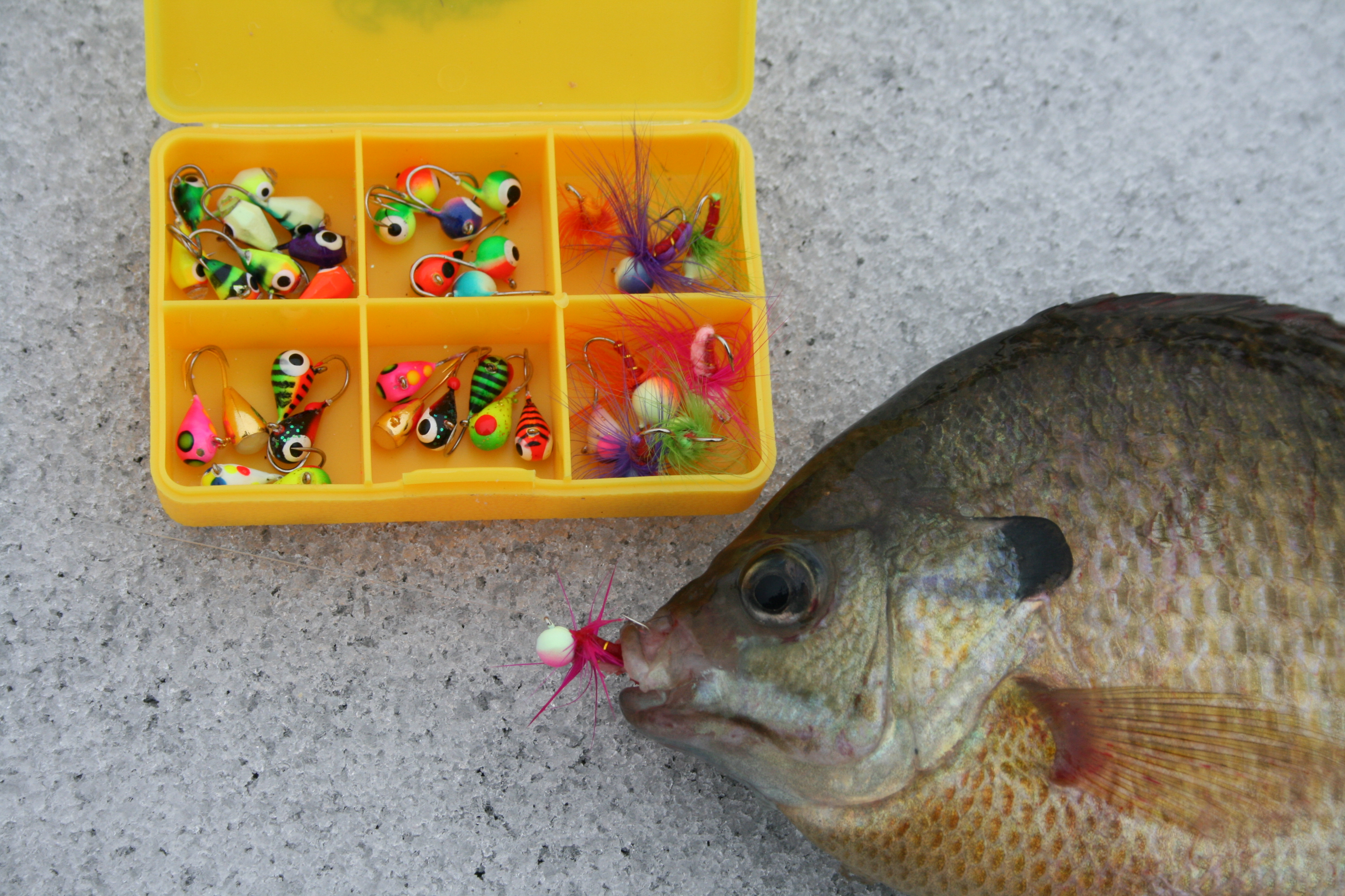 lure-box-small.jpg