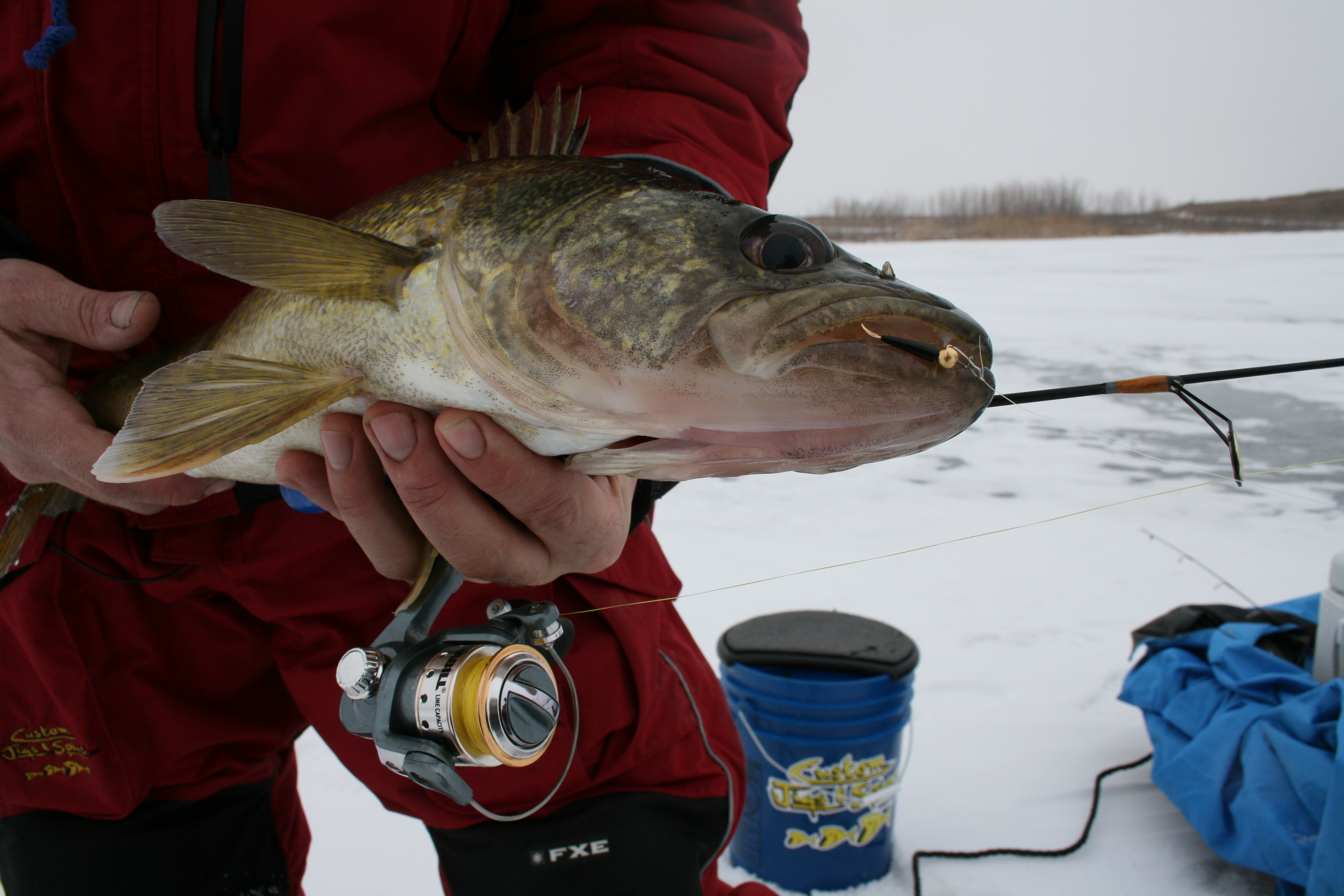 walleye-pm-rf.jpg