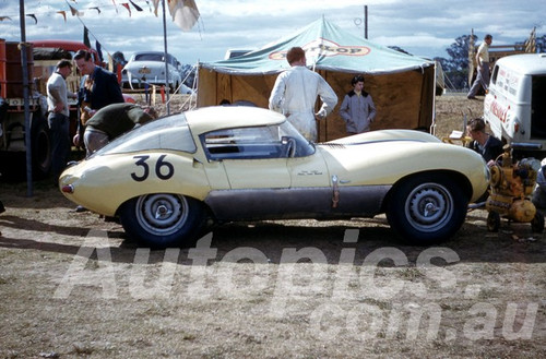 61055 - Frank Matich - D Type Jaguar  - Warwick Farm 1961 - Photographer Peter Wilson