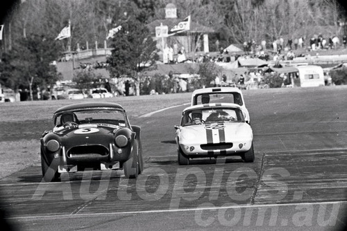 66115- Ron Thorp AC Cobra V8, Niel Allen Lotus Elan & John Leffler, Mini - Warwick Farm 1966 - Photographer Lance Ruting