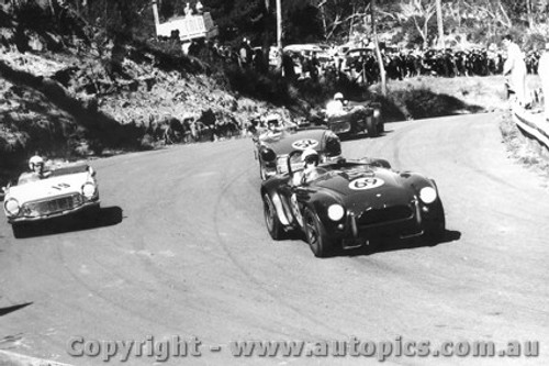 66422 - R. Thorp  AC Cobra  - Catalina Park Katoomba 28/8/19636 - Photographer Lance Ruting