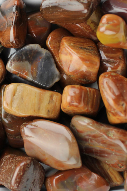 Petrified Wood Calming, ancestral DNA, grounding, strength, and support