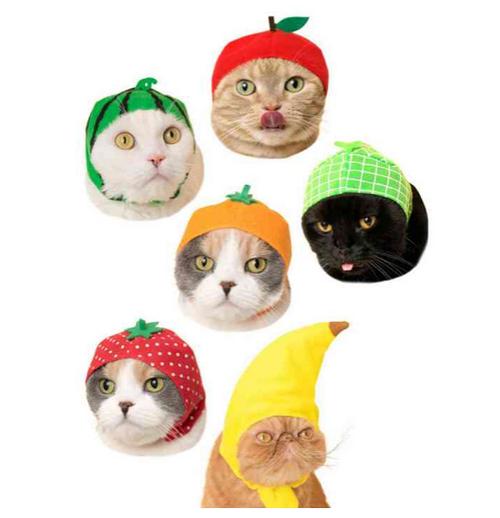 Fruit Cat Cap blind box