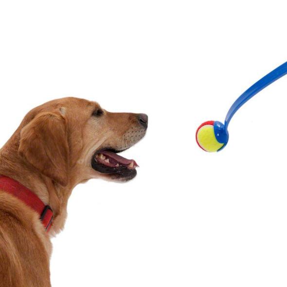 2-x-dog-tennis-ball-launchers-snatcher-online-shopping-south-africa-21681118019743.jpg