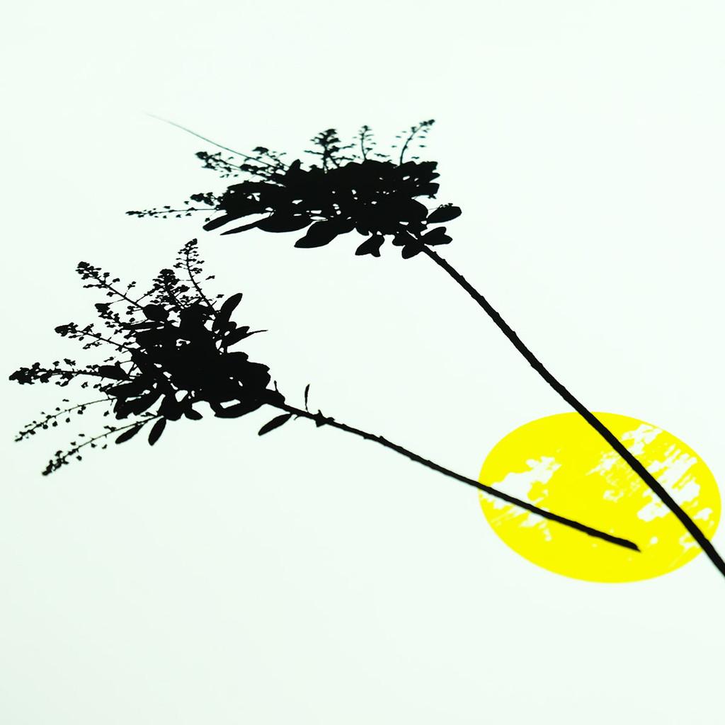Smoke tree flower screen print by Jacky Al-Samarraie