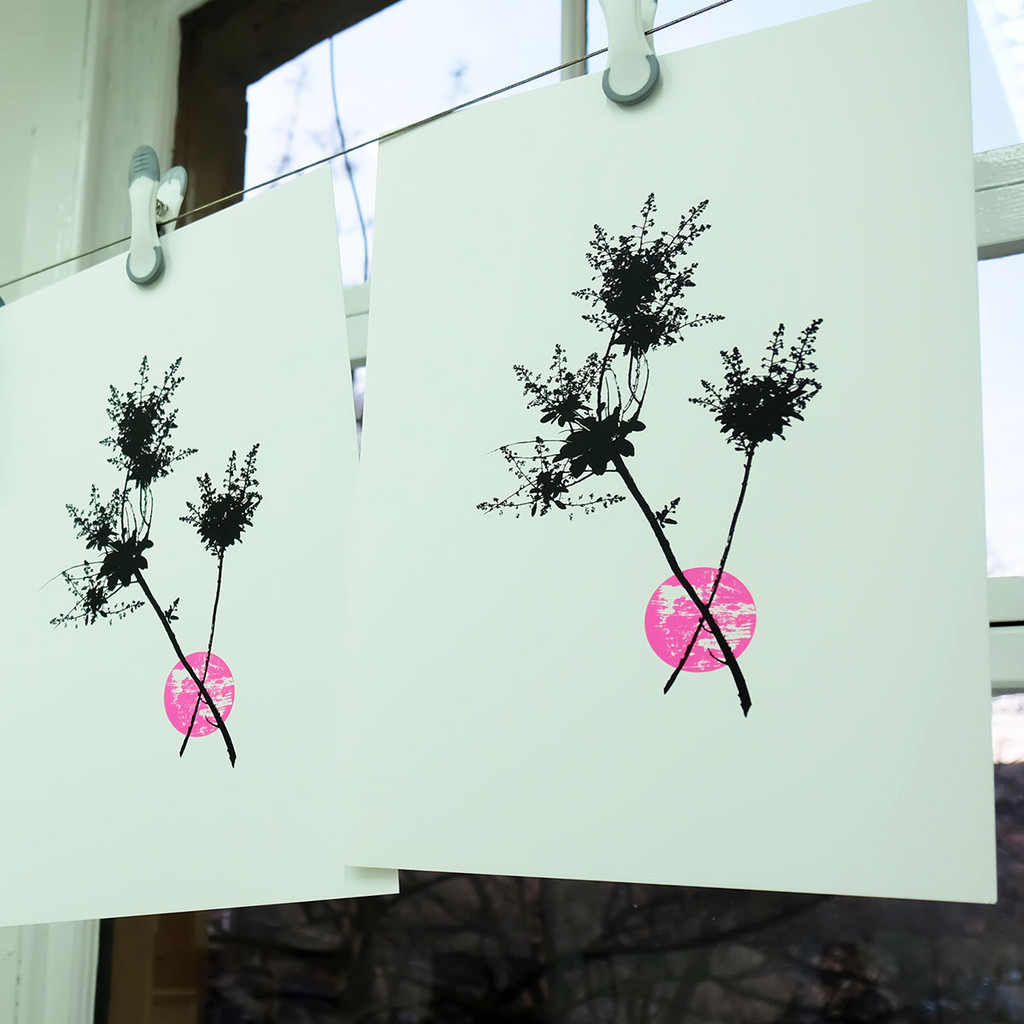Pink Smoketree  screenprints hanging to dry - The Art Rooms