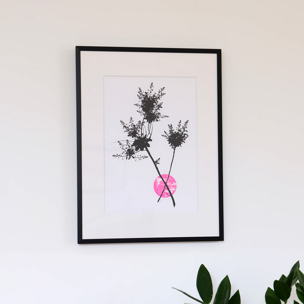Framed pink smoketree flower screen print by Jacky Al-Samarraie