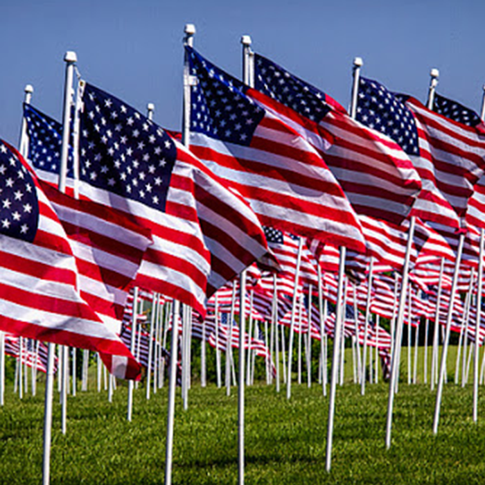 Rows of American Flags  on Flagpoles in Bright Green Grass