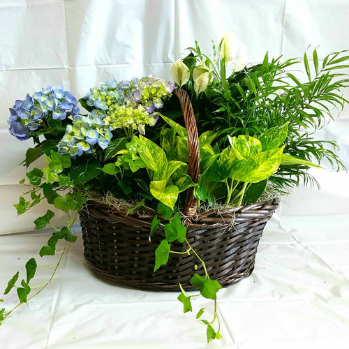 English Garden Wicker Plant Basket Flowers For The Home Midwood Flower Shop | Charlotte Florist Delivery Service