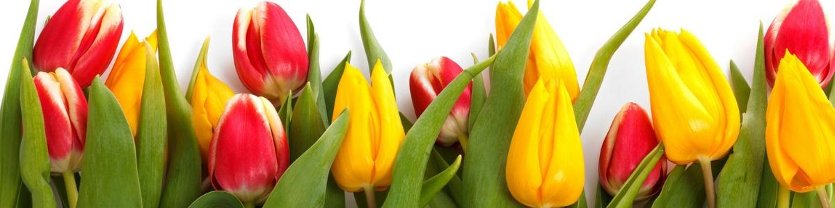 Midwood Flower Shop Charlotte Florist Since 1956