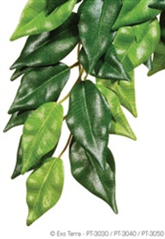 Exo-terra Silk Plant Small Ficus {requires 3-7 Days before shipping out}