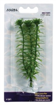 Marina Aquascaper Plant Anacharis{requires 3-7 Days before shipping out}