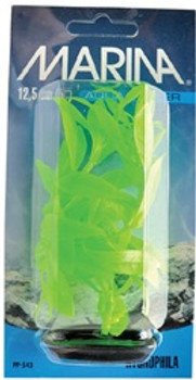 Vibrascaper Hygrophila Green 5 Inch {requires 3-7 Days before shipping out}