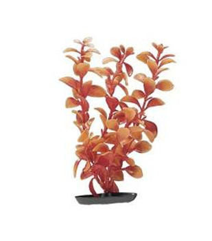 Vibrascaper Red Ludwigia Medium 8 In {requires 3-7 Days before shipping out}
