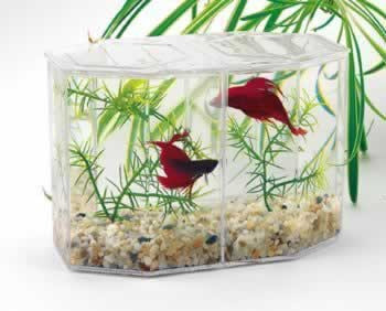 Lee's Betta Keeper W/lid Gravel And Plant Large