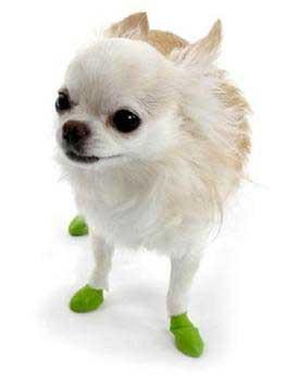 Protex Pawz Dog Boots - 12 Pk. Tiny