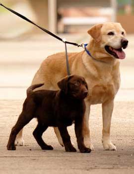 Sporn Double Dog Leash Black