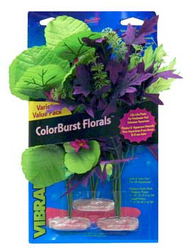 Blue Ribbon Colorburst Florals Amazon Flowering Cluster Variety Pack 3 Plants