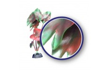 Weco Freshwater Series Red Tiger Lotus 6in
