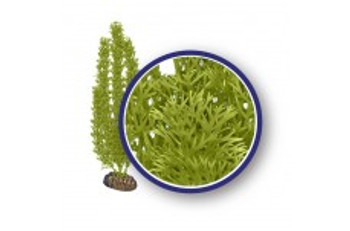 Weco Freshwater Series Green Foxtail 6in