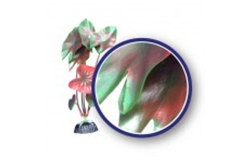 Weco Freshwater Series Red Tiger Lotus 9in
