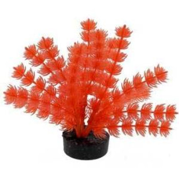 Blue Ribbon Neon Orng Foxtail Plnt