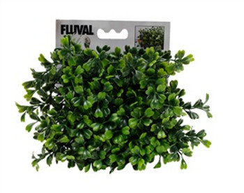 Fluval Chi Boxwood Ornament{requires 3-7 Days before shipping out}