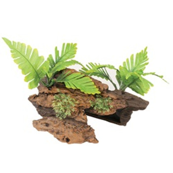 Ma Ntrl Malaysian Drftwd W/plants med {requires 3-7 Days before shipping out}