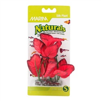 Ma Ntrl Red Foreground Silk Plant {requires 3-7 Days before shipping out}