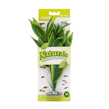 Ma Ntrl Green Dracena Silk Plant Md {requires 3-7 Days before shipping out}