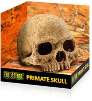 Exo-terra Terrarium Decor Primate Skull {requires 3-7 Days before shipping out}