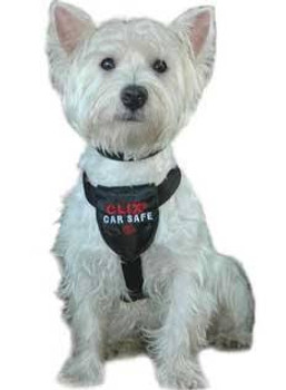 """TQC1006: The CLIX CarSafe harness has been developed to provide safety and comfort for your dog, both in the car and whilst walking.  Soft neoprene padding covers all points of contact to ensure maximum protection and comfort, with particular focus o"""""""