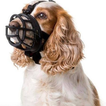 """It has taken four years to develop, and we believe that it was worth the wait.  Safety note: While a muzzle can be very useful as a safety backup when training your aggressive dog, they can be harmful or even dangerous if your dog is repeatedly expos"""""""