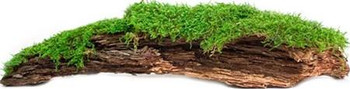 Galapagos Basking Bark is a best selling terrarium accent. It comes in Natural or covered in Moss to add humidity and ambiance to your tank. It floats on water for turtles and makes great hides for snakes. Frogs and salamanders love the added humidity. Attach it as a background and now there are ledges and platforms to climb on!