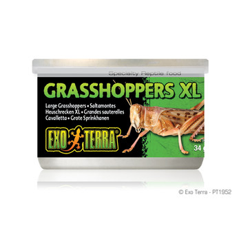 Exo Terra Canned Grasshoppers XL, 1.2 oz