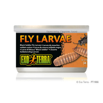 Exo Terra Canned Black Soldier Fly Larvae, 1.2 oz
