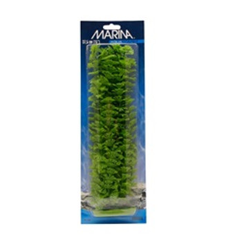 Aquascaper Ambulia Xl 15 Inch{requires 3-7 Days before shipping out}