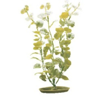 Aquascaper Cardamine Medium 8 In {requires 3-7 Days before shipping out}