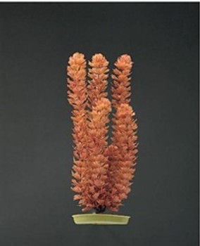 Aquascaper Foxtail Xl 15 Inch{requires 3-7 Days before shipping out}